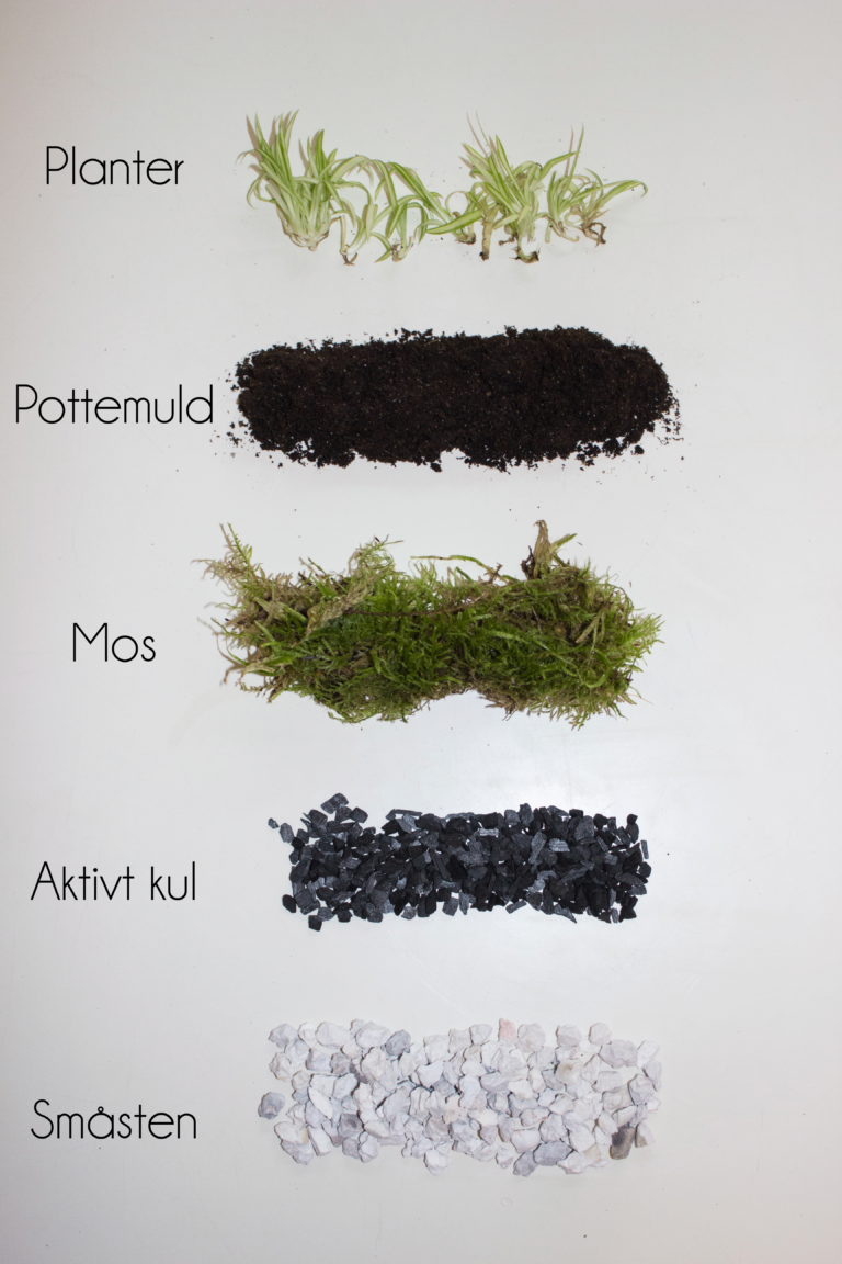 How To Make A Mini Terrarium The Little Botanist